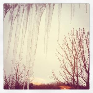 Bellas bilder januari 2013 336